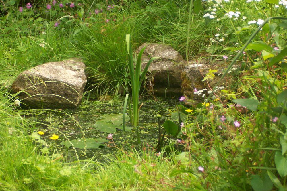 Ecologische tuinvijver aanleggen natuurpunt for Kleine tuinvijver