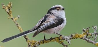 natuurpunt vogels herkennen