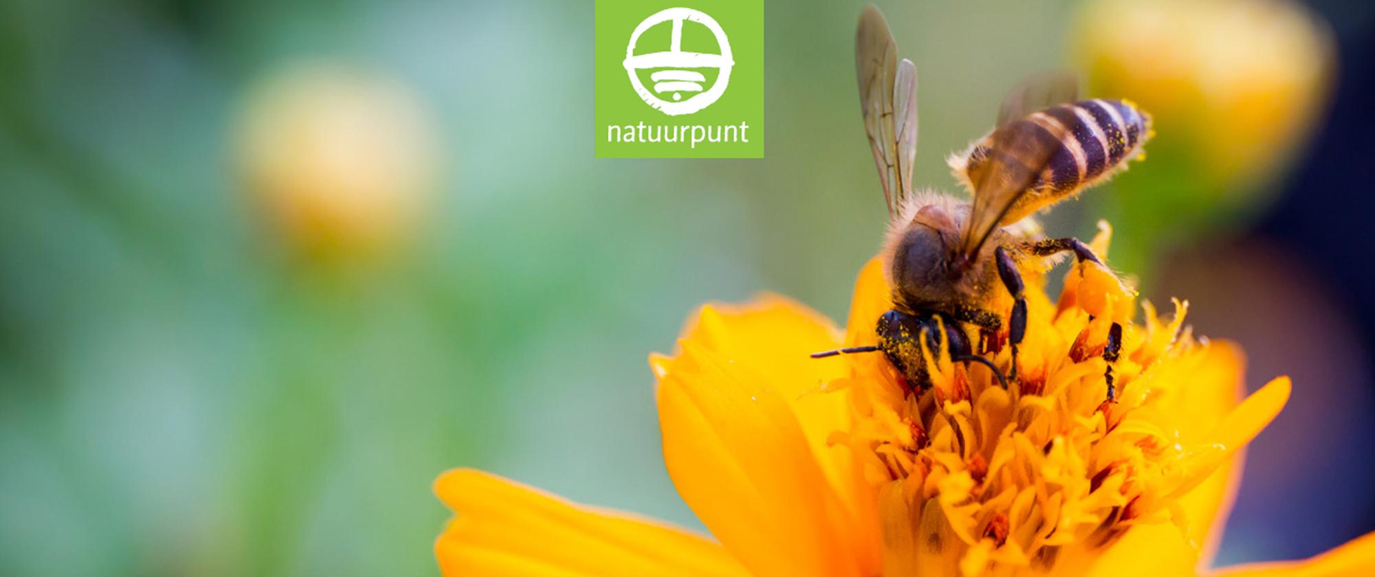 public://aan-de-slag-voor-bijen_besturen_1_groter.jpg