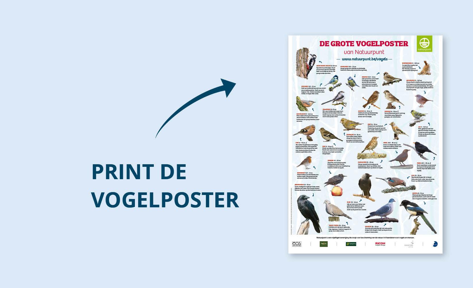 Download de vogelposter en ander materiaal van Het Grote Vogelweekend