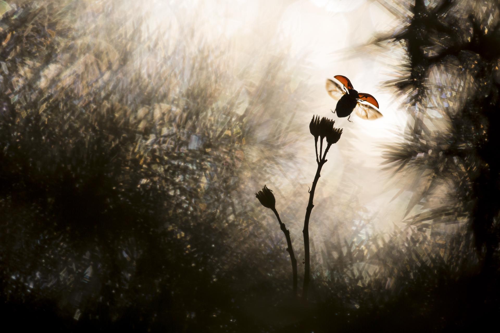 Nature Photographer of The Year - winnaar 2018 - Bastien Riu (France) | Flight