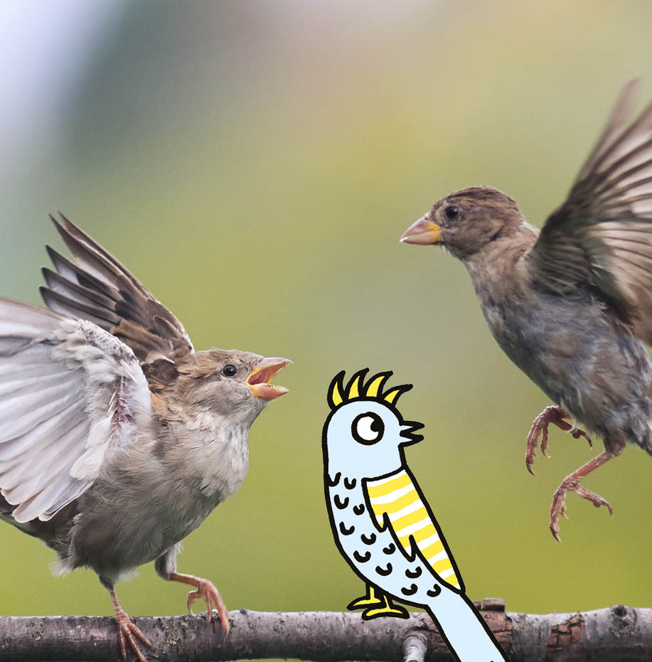 Foto Grote Vogeltelweek voor scholen Natuurpunt