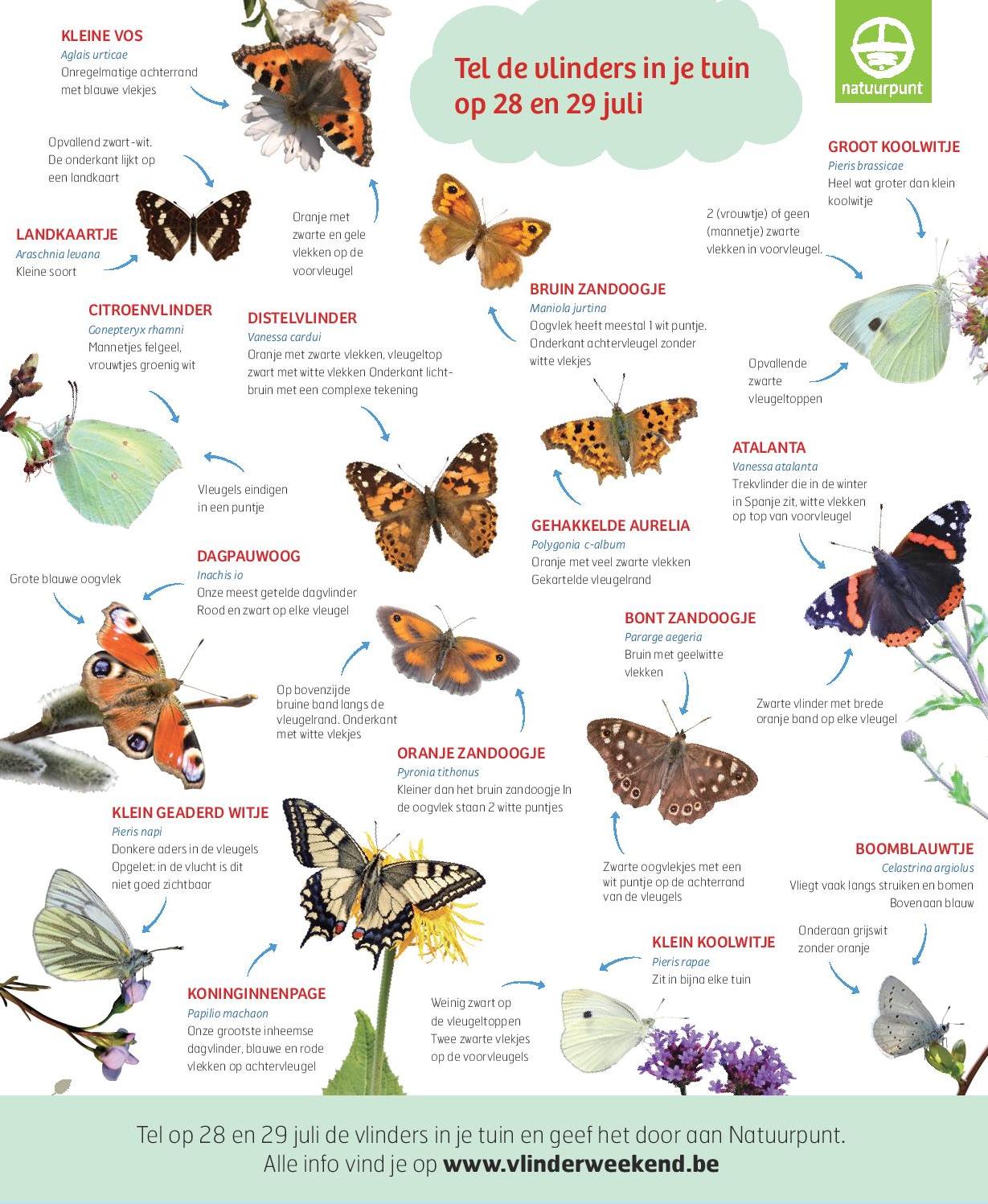 Herken de vlinders, print deze prent af