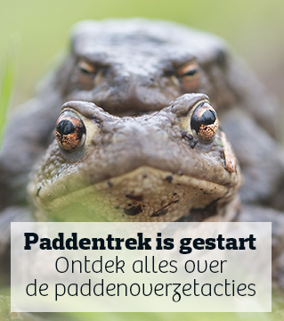 De paddentrek is gestart - Doe mee met de paddenoverzet