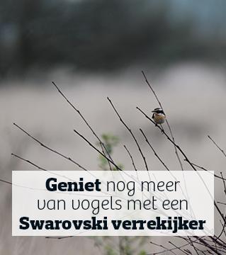 Het Grote Vogelweekend van Natuurpunt komt er aan