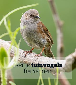 Leer je tuinvogels herkennen en tel mee met Het Grote Vogelweekend