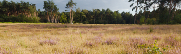 Landschap De Liereman | Natuurpunt