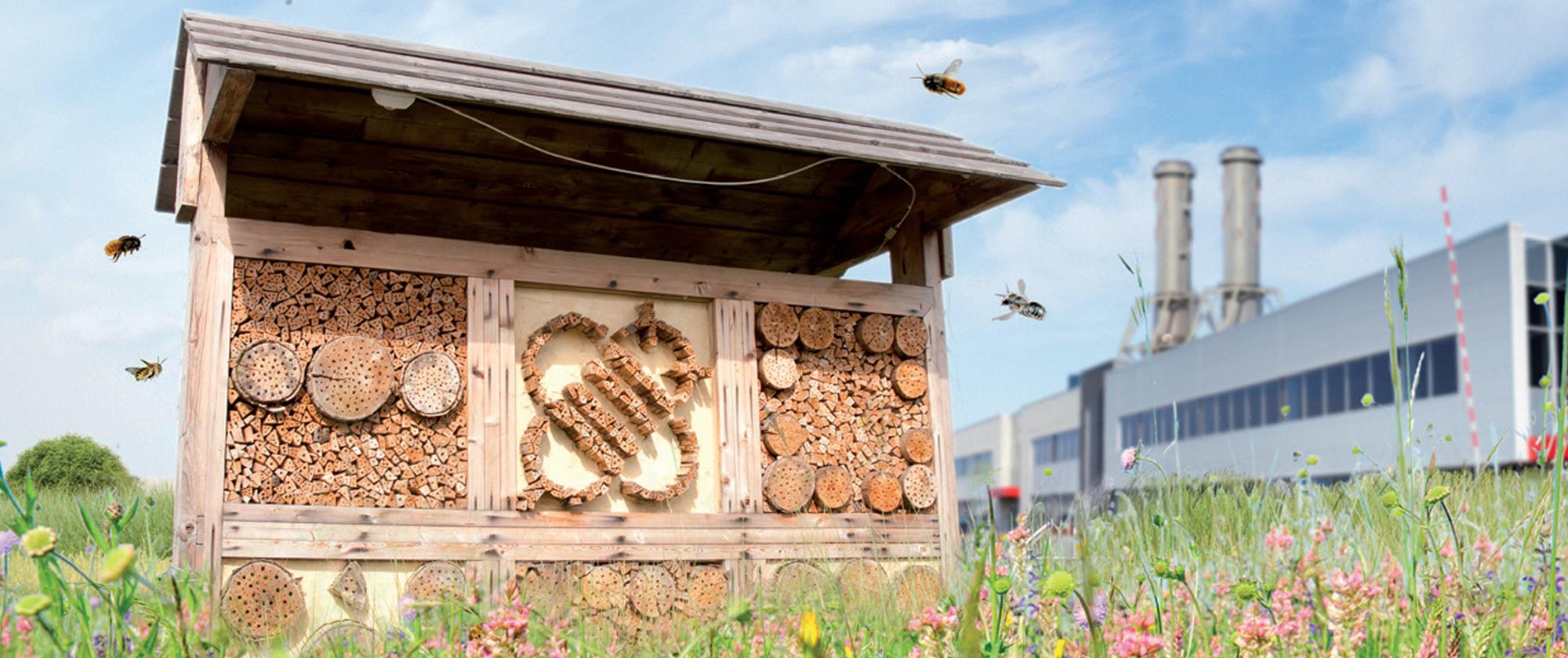Aan de slag voor bijen - tips voor bedrijven