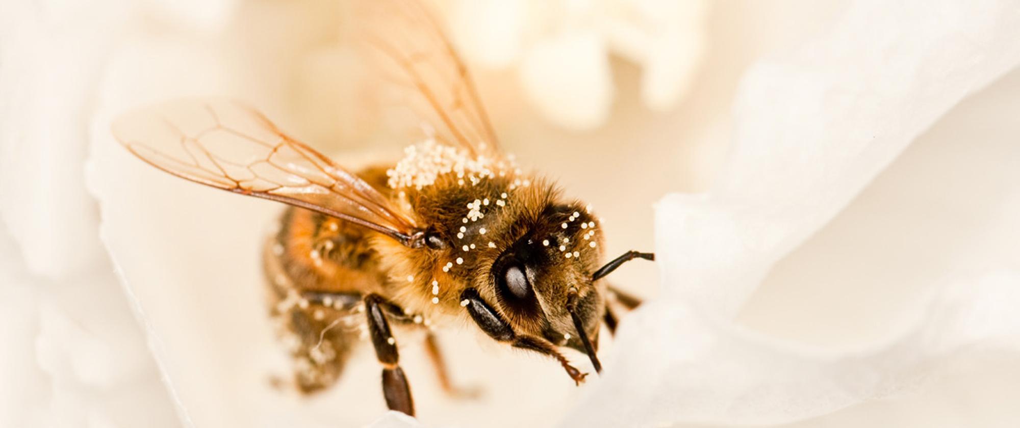 public://itr_longread/aan-de-slag-voor-bijen_besturen_2_groter.jpg
