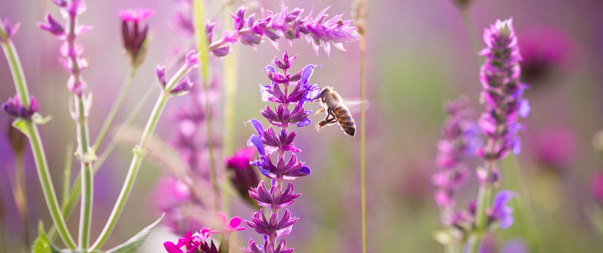 Aan de slag voor bijen - tips voor lokale besturen
