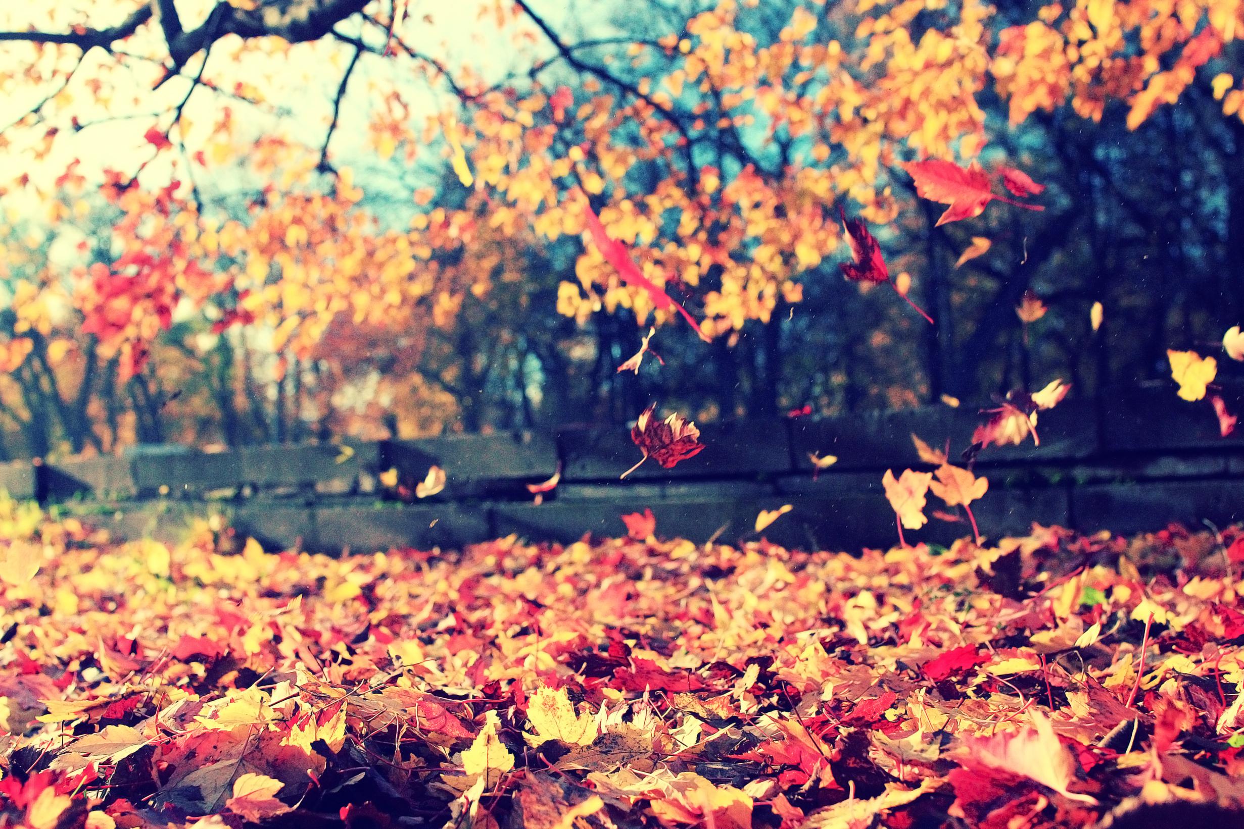 Laat herfstbladeren liggen
