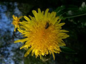 bij en bloem