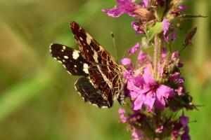 Vlinderwandeling