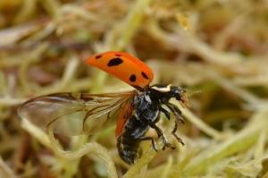 Lieveheersbeestjeswandeling in Landschap De Liereman