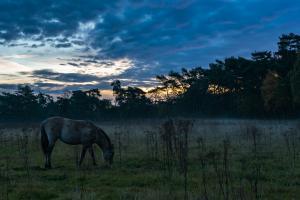 Zonsopgang in Landschap De Liereman
