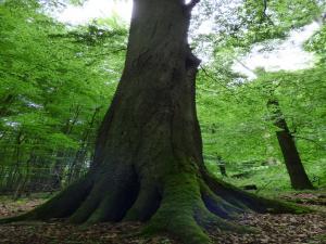 Zoniënbeheer: samen werken voor betere natuur