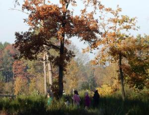 Weetjes over struiken en bomen in Landschap De Liereman