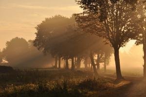 Mist in de Bolkse Beek