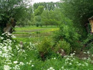 Driesbeekvallei