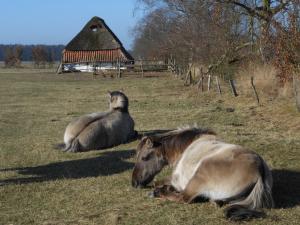 Zondagswandeling in Landschap De Liereman