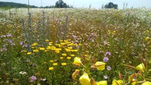 Bloemenweide helpt de natuur en is een streling voor het oog.