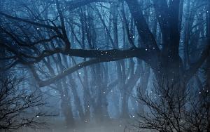 Vuurvliegjes in het bos
