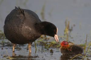 broedvogels en hun kroost