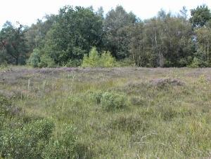 Heidewandeling in Landschap De Liereman, gewoon doen!