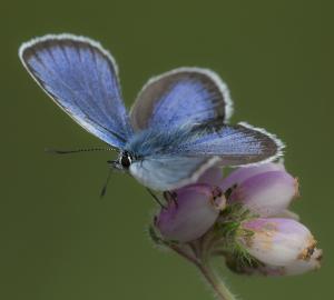 Vlindercursus