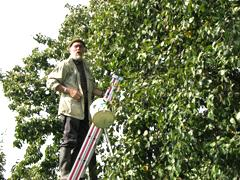 Panneweel.boomgaard