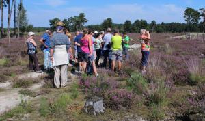 Heidewandeling in Landschap De Liereman, elke zondag in augustus!