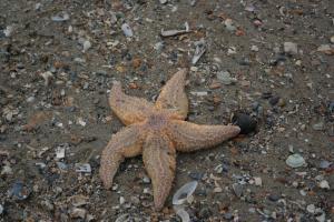 Strandvondsten op het strand van Wenduine