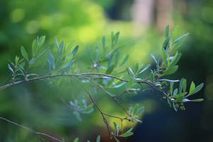 Plantencursus voor beginners