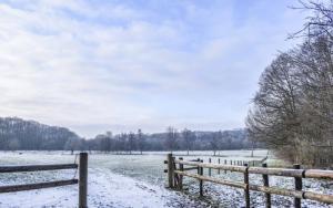 Kravaalbos in de winter