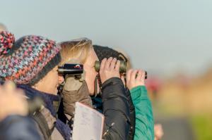 Cursus: Leren kijken naar vogels