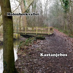 Verbinding Molenbeekvallei & Kastanjebos