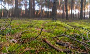Mossenwandeling in Landschap De Liereman
