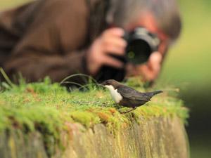 Cursus Natuurfotografie voor groentjes (Lummen)
