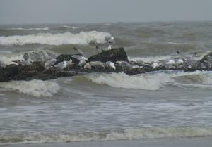 strandvondsten en kruien