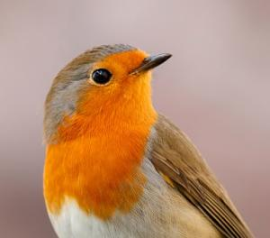 Resultaten Het Grote Vogelweekend