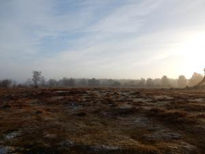 Nieuwjaarswandeling in Landschap De Liereman
