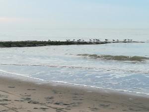 strandhoofd met meeuwen