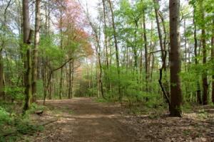 Wandelweg in het Hagelands Bos