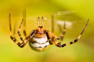 Cursus: Spinnen