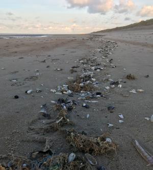 Vloedlijn t.h.v. het strand van Vosseslag