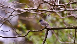Cursus Vogelgeluiden leren herkennen