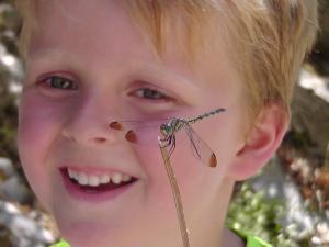 Voordracht libellen