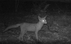 vos-nacht