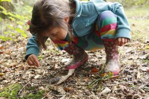 Op ontdekking in het bos
