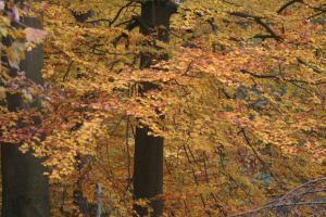 Het Zoniënwoud in herfstkleuren om even weg te dromen.